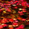 CANON Canon EOS Kiss Digital Xで撮影した植物(秋を浮かべて)の写真(画像)