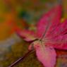 CANON Canon EOS Kiss Digital Xで撮影した植物(秋蕩)の写真(画像)