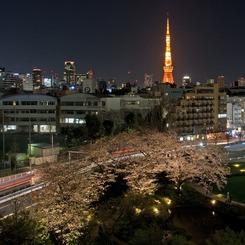 CANON Canon EOS Kiss Digital Xで撮影した風景(桜 ~ STYLISH)の写真(画像)