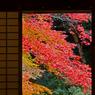 CANON Canon EOS Kiss Digital Xで撮影した風景(障子を開けると…秋)の写真(画像)