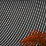 CANON Canon EOS Kiss Digital Xで撮影した建物(寺町通りの秋)の写真(画像)
