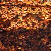 池の中の秋
