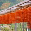 串柿の里にて-2