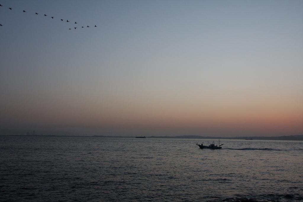 海鳥 漁船