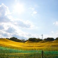 CANON Canon EOS 40Dで撮影した(田園)の写真(画像)