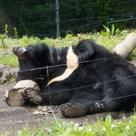 CANON Canon EOS 40Dで撮影した動物(寝返りグマ)の写真(画像)