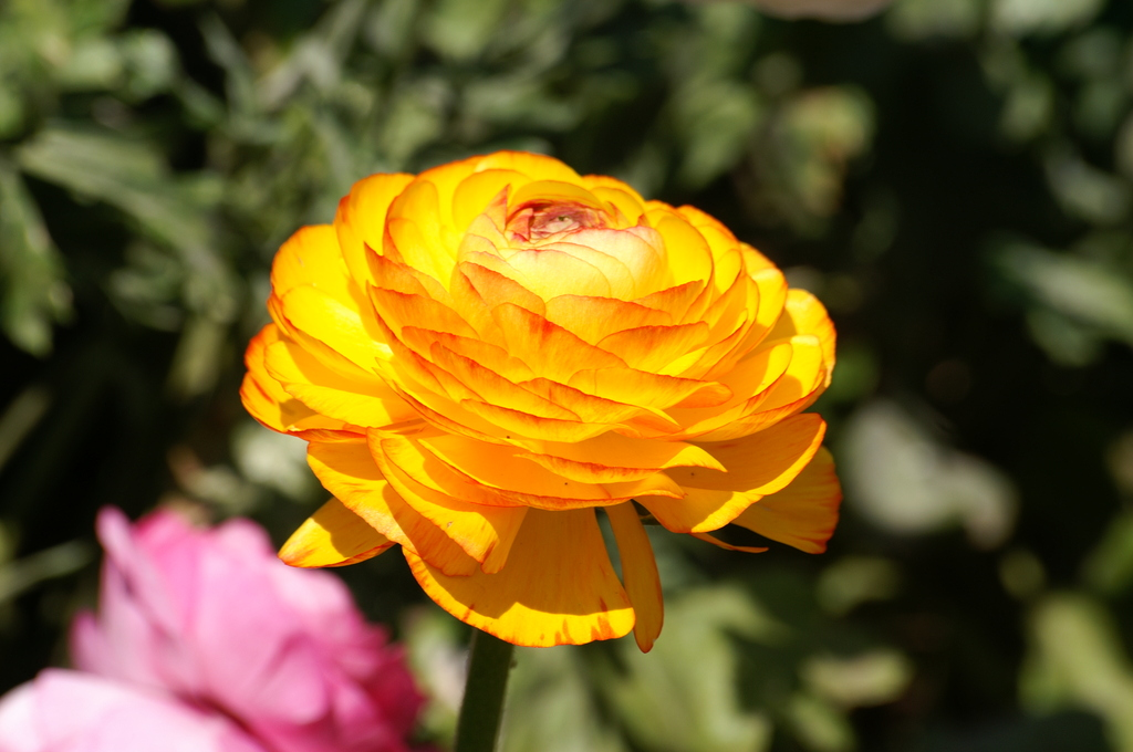 黄色の花びら