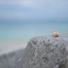 沖縄の海と貝
