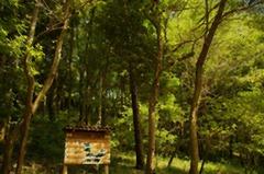 トトロの森(水彩画風)
