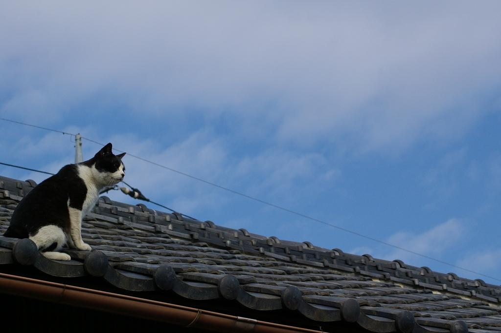 上から目線で者を見る猫1