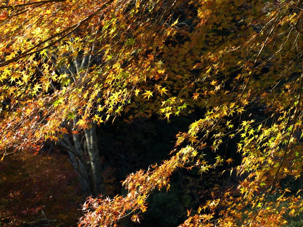 清滝の紅葉