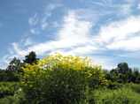 夏空・7月の終わり