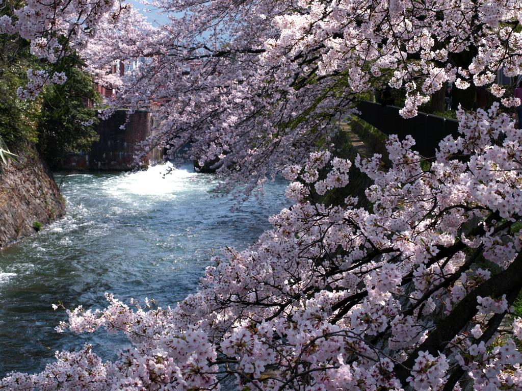 京都冷泉通りの疎水