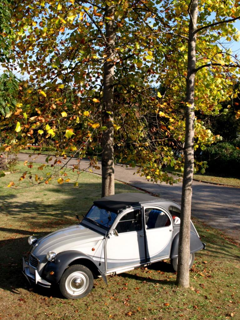 秋のガレーヂ