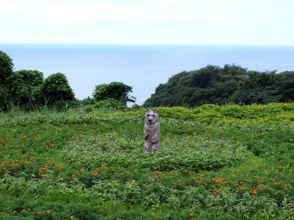 海辺の犬・熊??