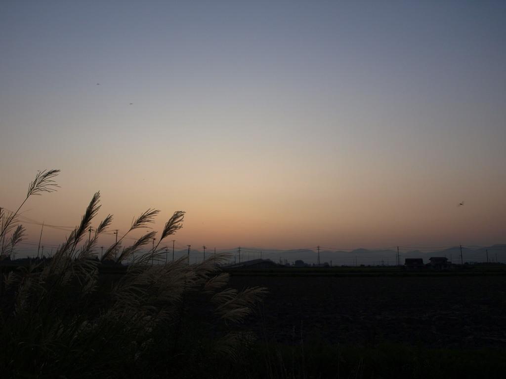 秋トンボの舞う景色