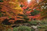 大寧寺の紅葉3