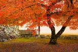 秋の漆喰壁
