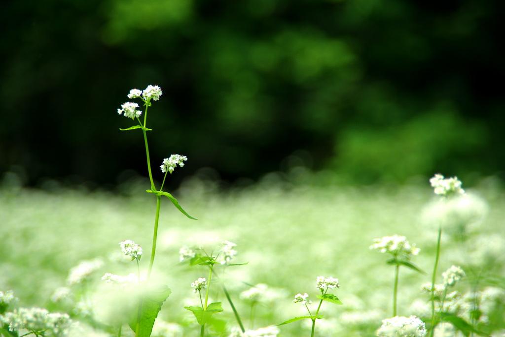 白花の詩。
