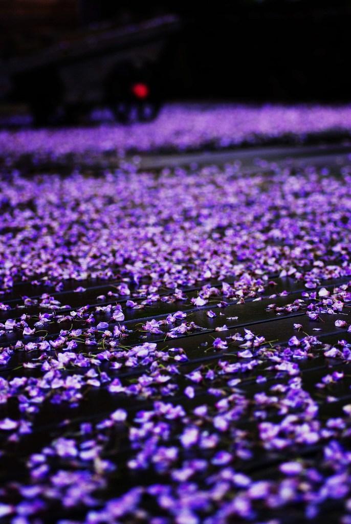 wisteria-river 。
