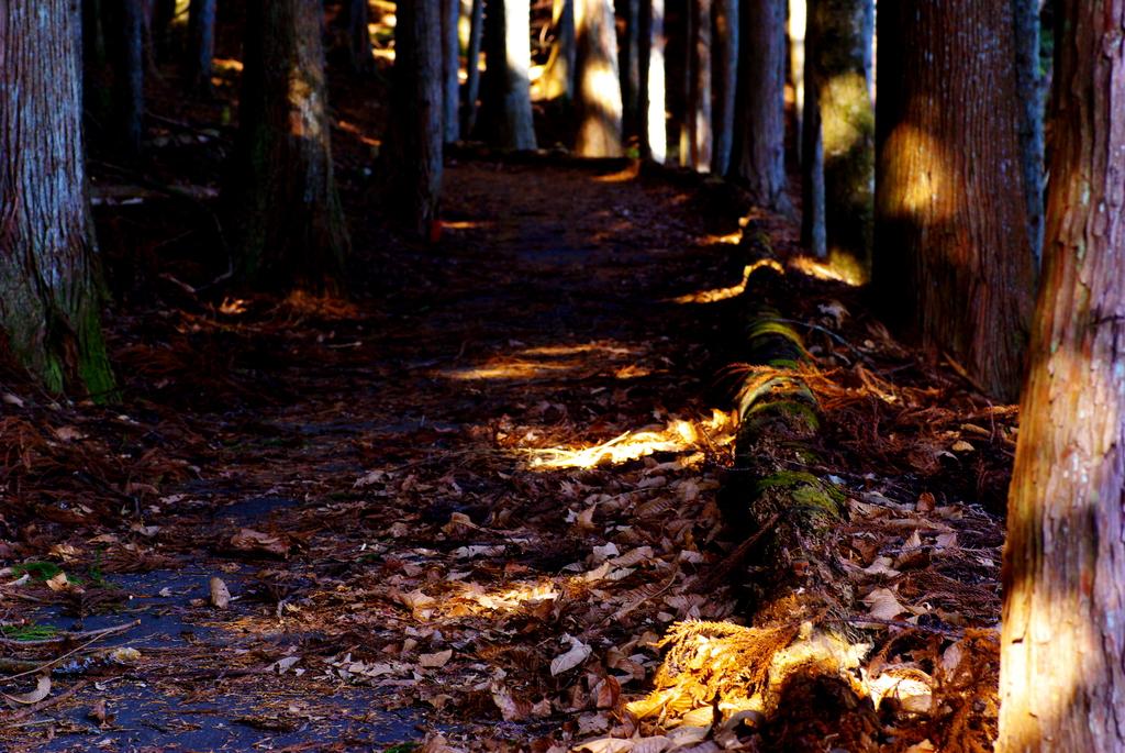木漏れ日。