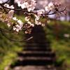 春の階段。
