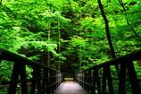 緑の世界へ。