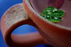 Cup&Leaf。