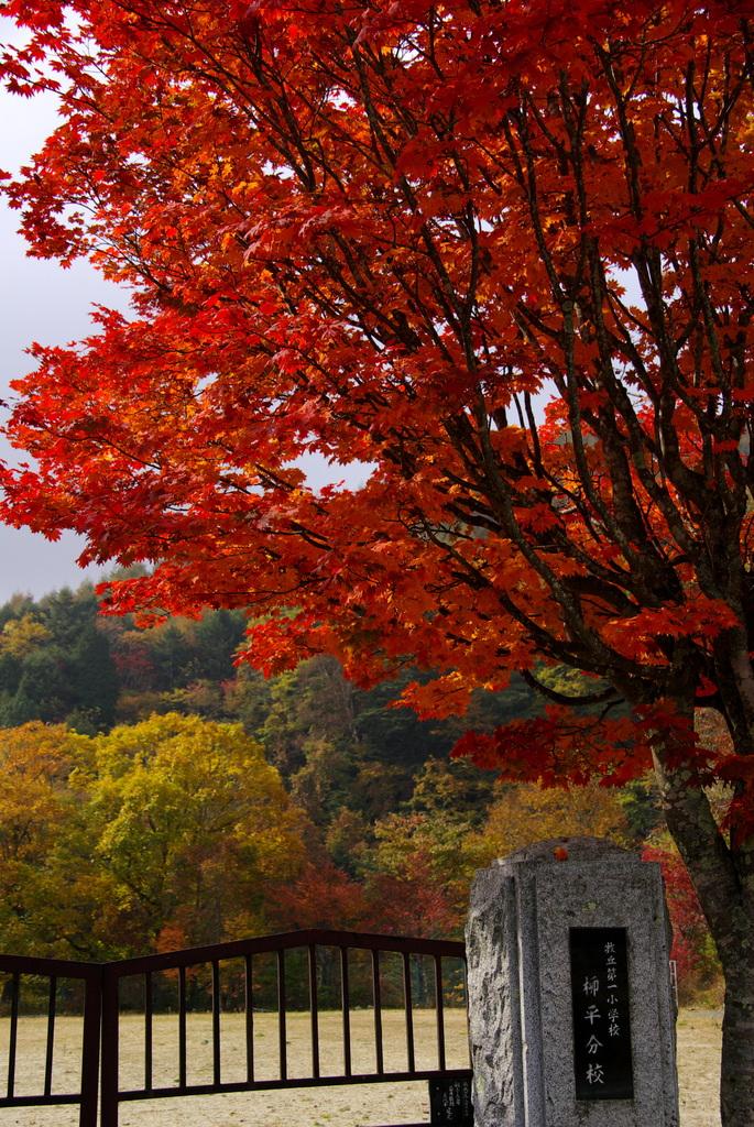 静寂の紅葉。