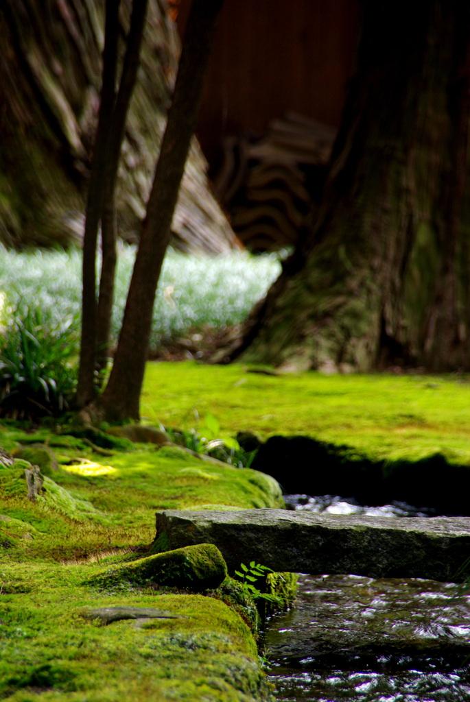 苔の小川。