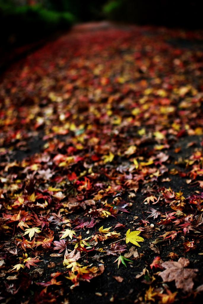 秋の破片(part3)