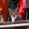 香港 長州島のネコ