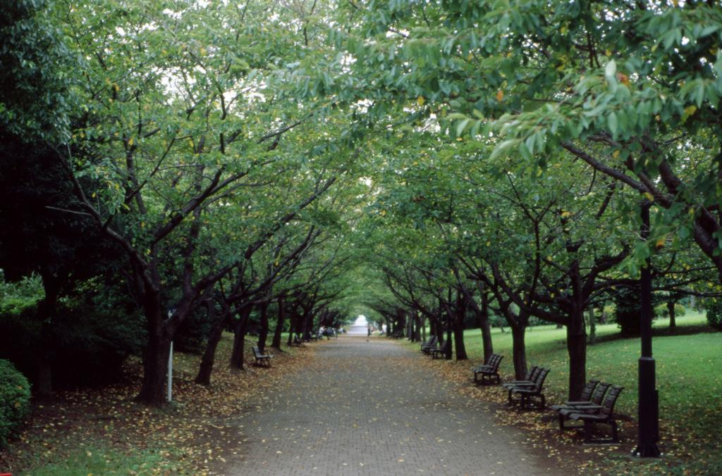 秋へと向かう道