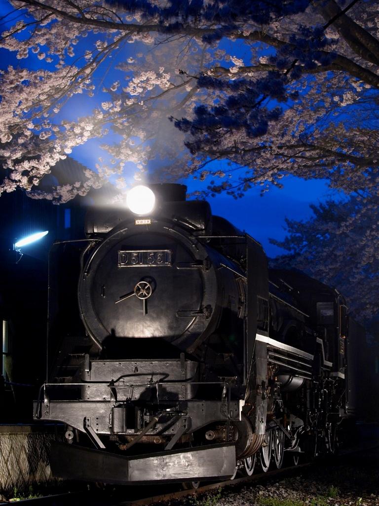 夜桜とSL