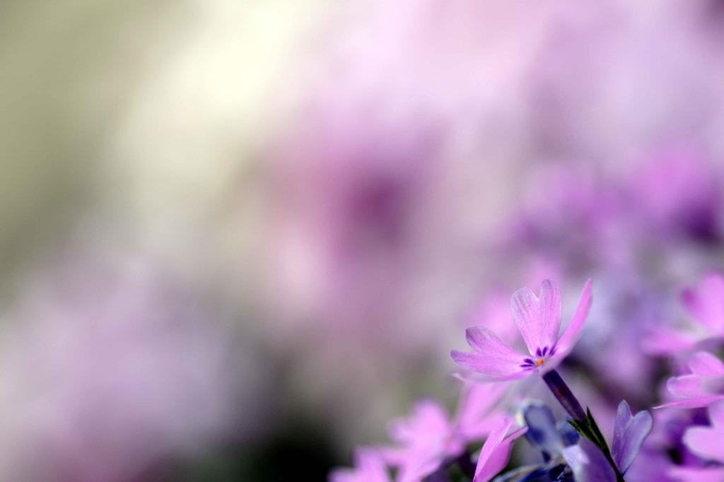花ゐろ 七