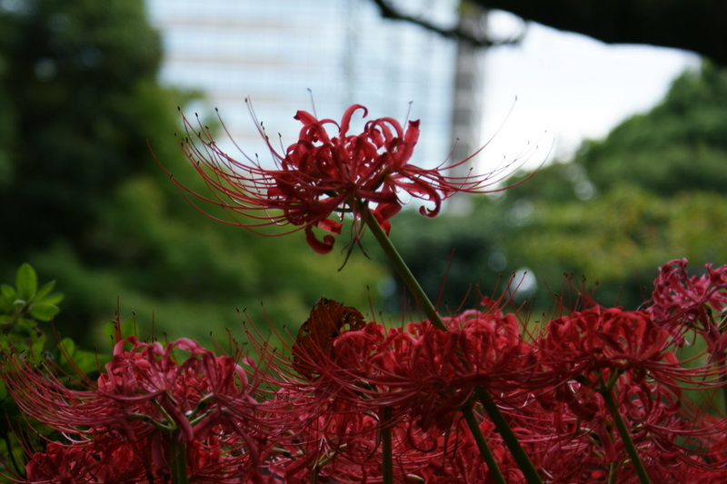 小石川後楽園_20080927_137