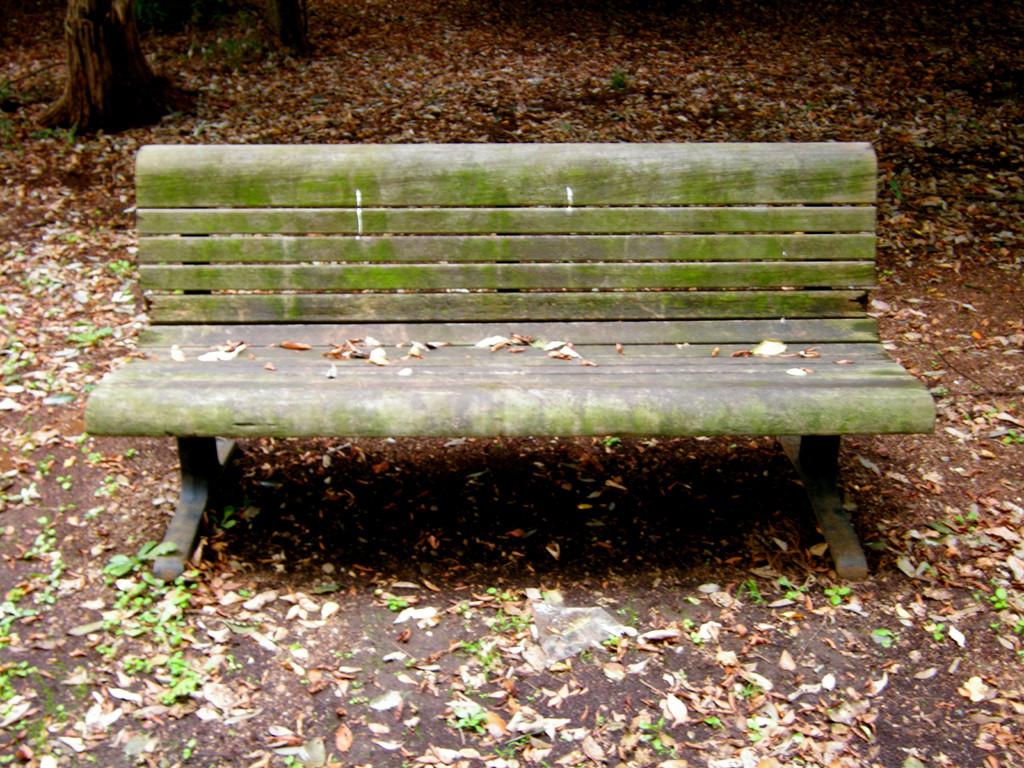 雑木林のベンチ