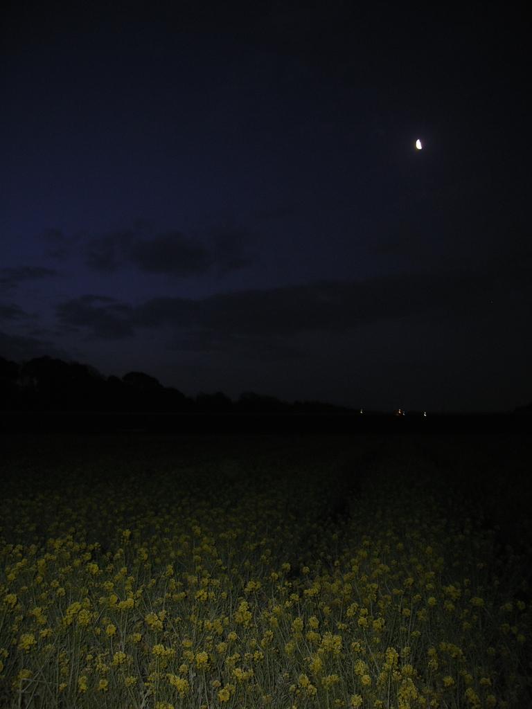 ある春の日の夜明け