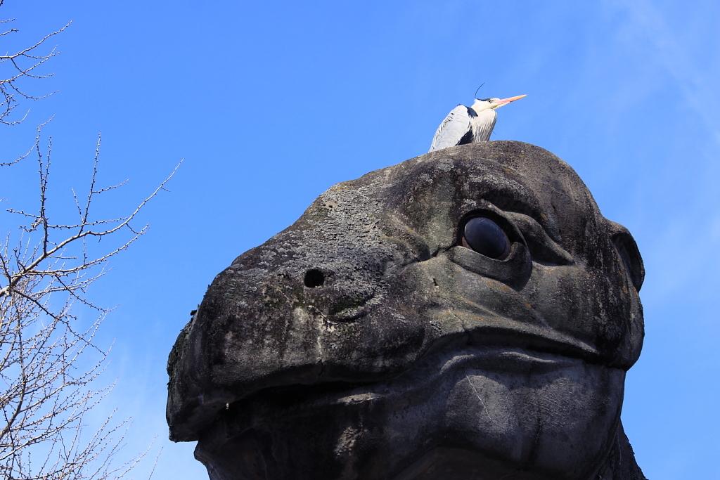 恐竜と青鷺爺さん