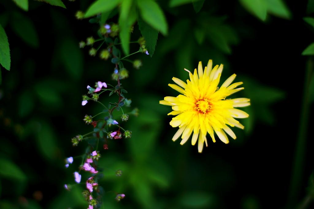 散る花、咲く花