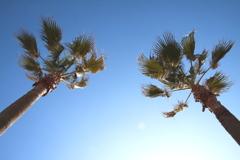 パームツリー