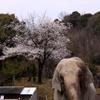 春の動物園
