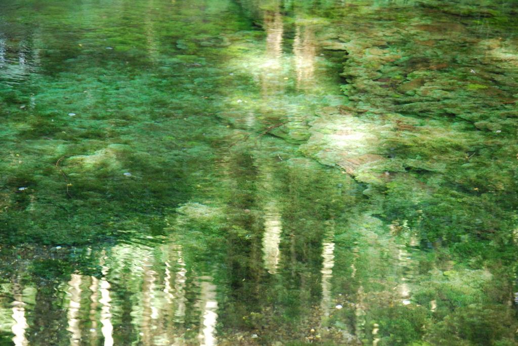 熊本・池山水源