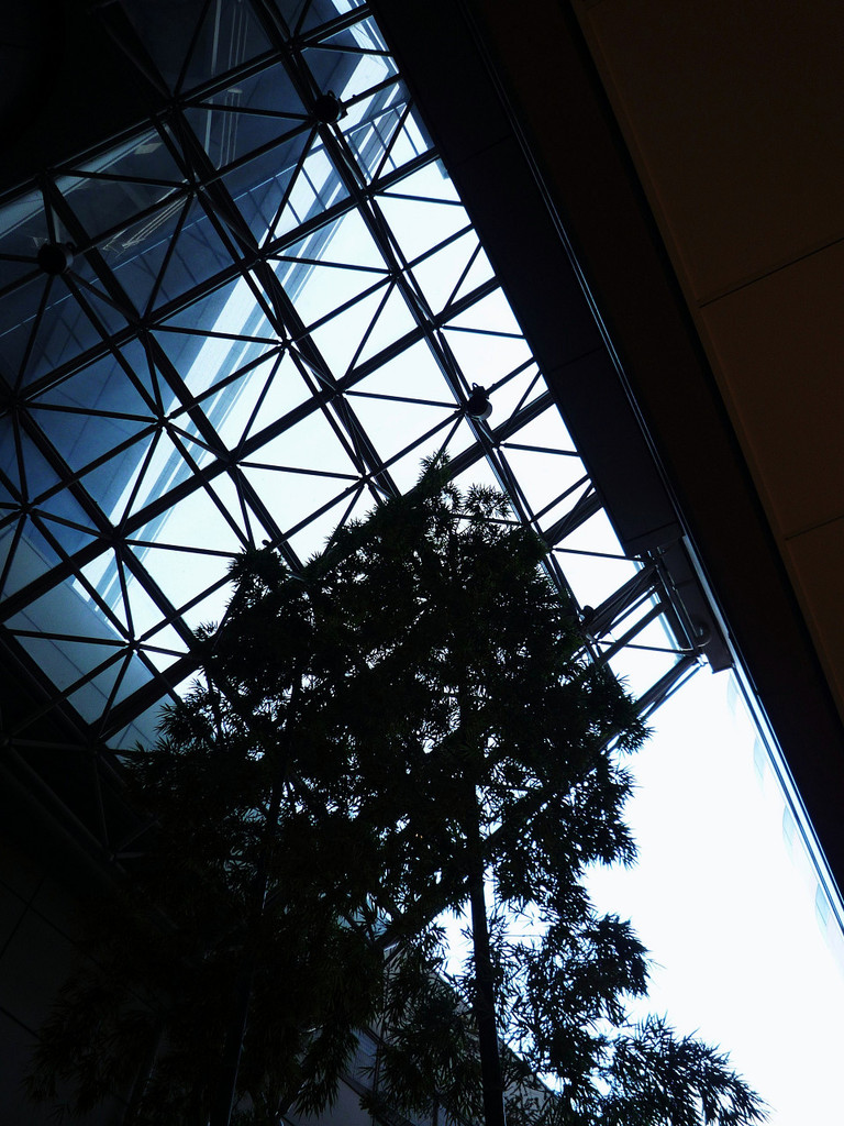 Glass-roof