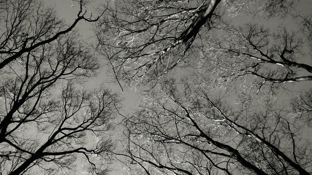 Forest-vein