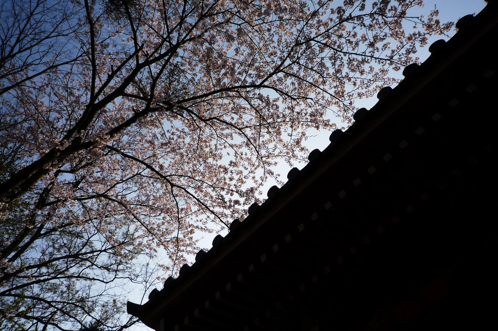 Sakura-shrine