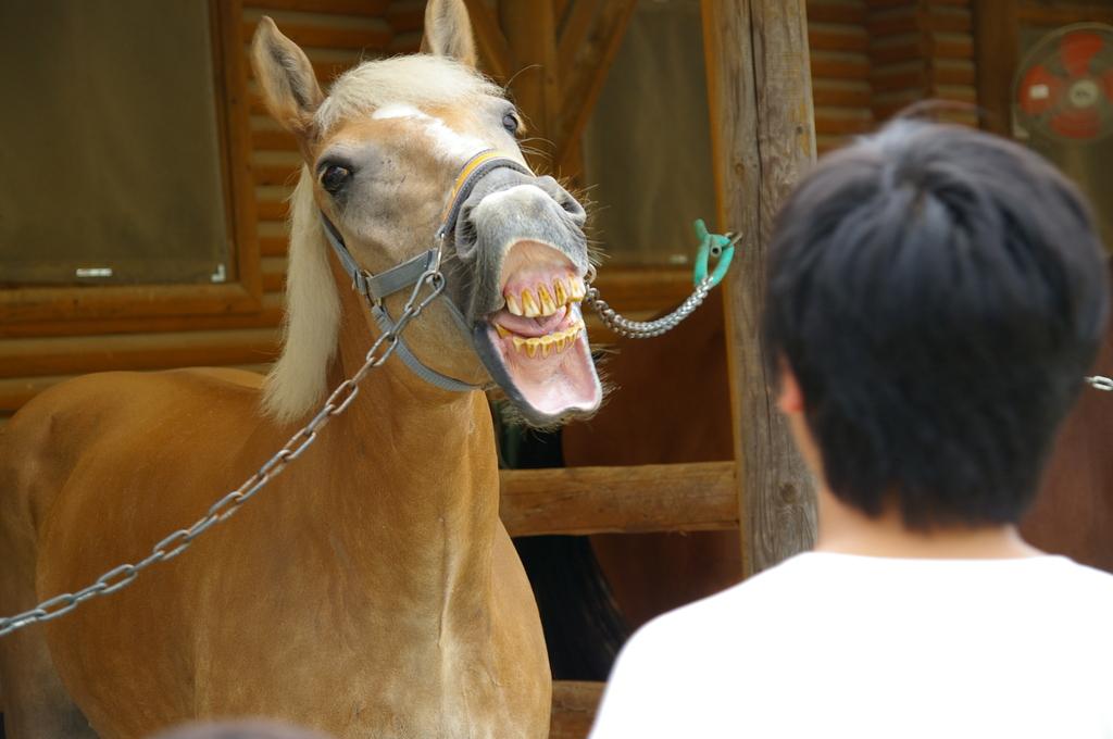 この馬、凶暴につき・・・