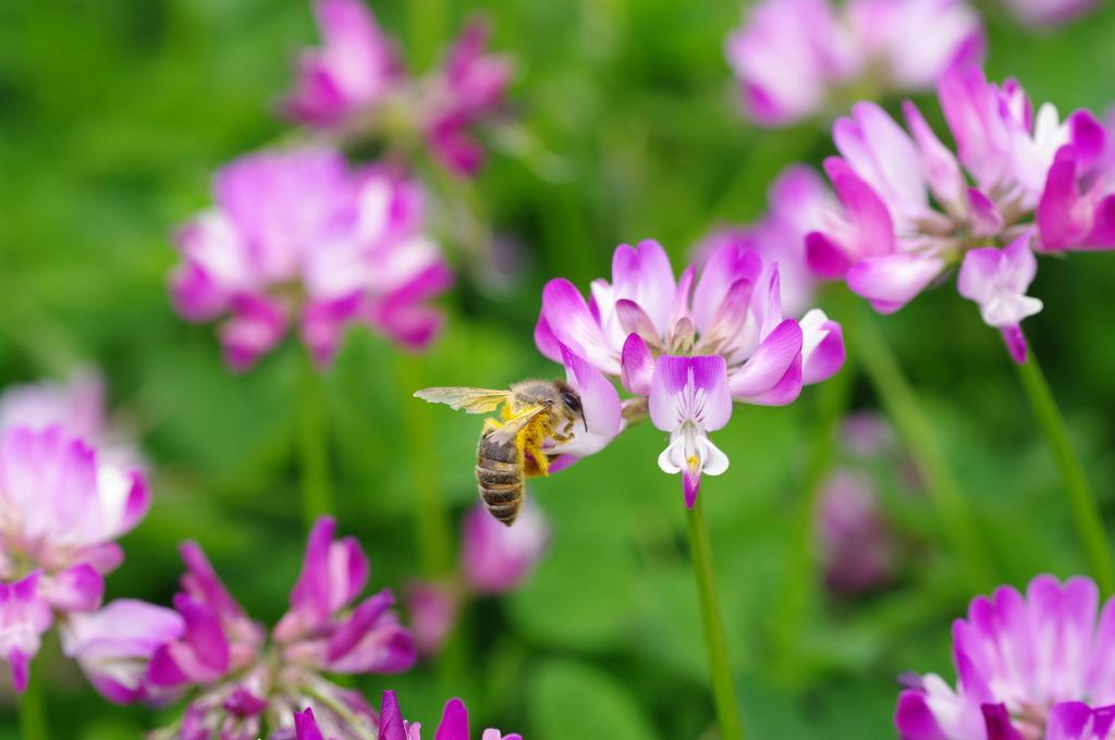 はたらくハチさん(ベタやなぁ・・)