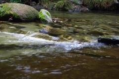粟又の滝上流 No.2