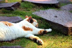 休日は猫もぐーたら